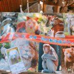 【横浜】よこはま動物園ズーラシアに行ってきました!レアキャラ☆チーターのサービス精神に思わず拍手♪(写真多め!)